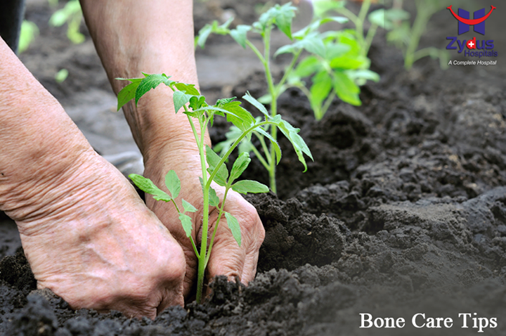 Gardening is said to be one of the best exercises for maintaining healthy bones!   #BoneCare #ZydusHospitals #GoodHealth #Ahmedabad