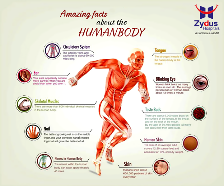 The human body of man is made up of many tissues and organs. They number in millions. The cells are organized uniquely and function dynamically together. Their complexities can be understood better when it is closed scanned. Here are some bits of information that are quite interesting!  #InterestingBodyFacts  #HumanBody #DidyouKnow #ZydusHospitals #Ahmedabad
