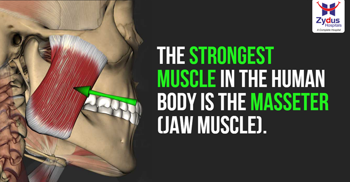 Did you know your face carries strongest muscle of your body?  #InterstingBodyFacts #DidYouKnow #ZydusHospitals #Ahmedabad
