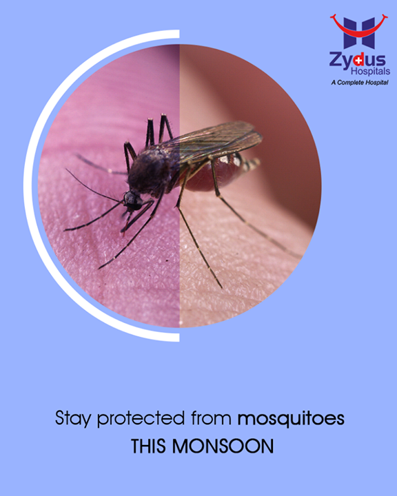 Chasing the mosquitoes away during monsoon is really important because stagnant water is the most common place of mosquitoes breeding. Drain out coolers as well as flower vases which you do not use, use mosquito nets as well as creams and repellents which are easily available in the market and will protect you from mosquito bites.  #Monsoon #StayHealthy #ZydusCare #ZydusHospitals #Ahmedabad #Gujarat